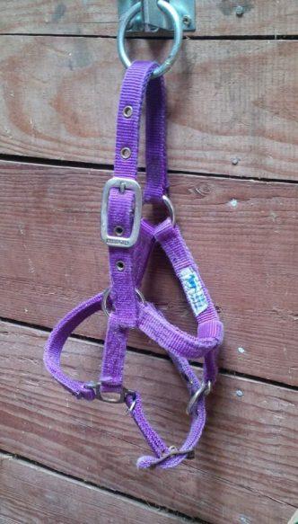 purpleminihalter